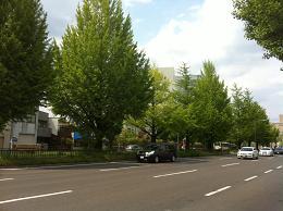 堀川通り5月