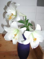 青い花瓶と百合