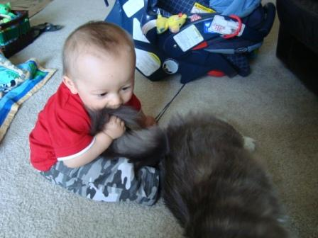 kitty d