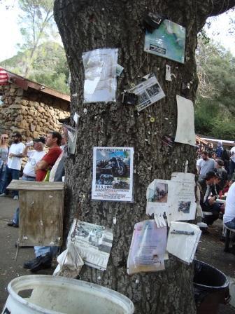 Malibu rock store tree
