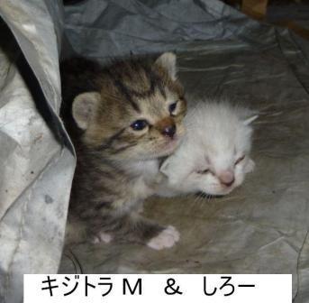 10-12 cat