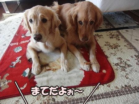 CIMG2270_20110127174942.jpg