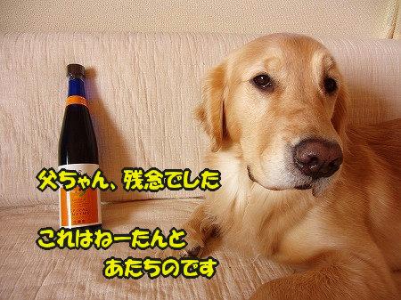 CIMG2637_20110207111450.jpg