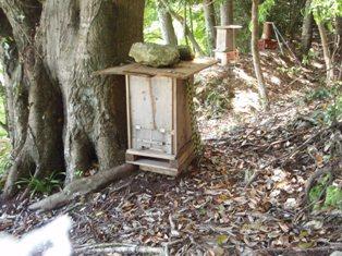 巣箱設置箇所