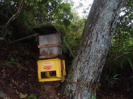 天然林の待ち箱