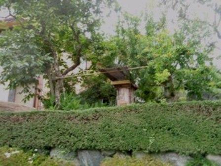 Yさんの庭