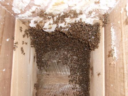 採蜜ご蜂の移動