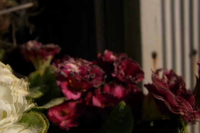 0108-sanpo-07.jpg