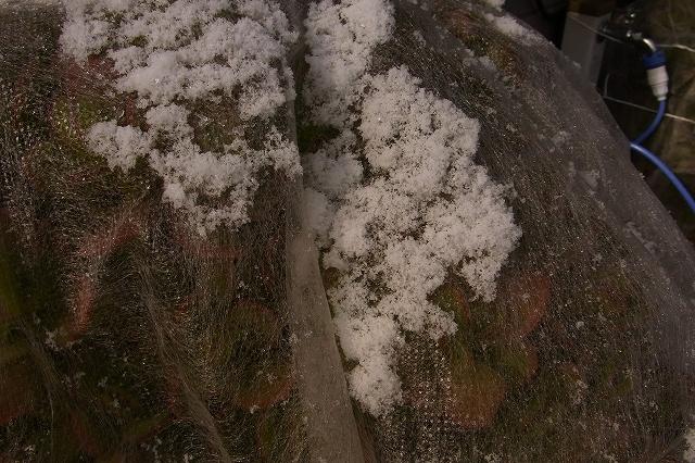 0116-snow-014.jpg