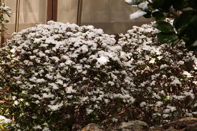 0116-snow-07.jpg