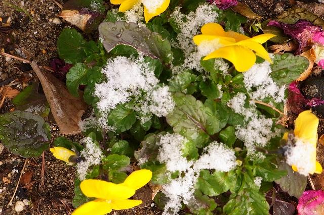 0116-snow-08.jpg