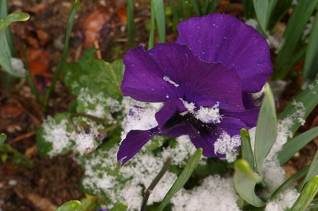 0116-snow-09.jpg