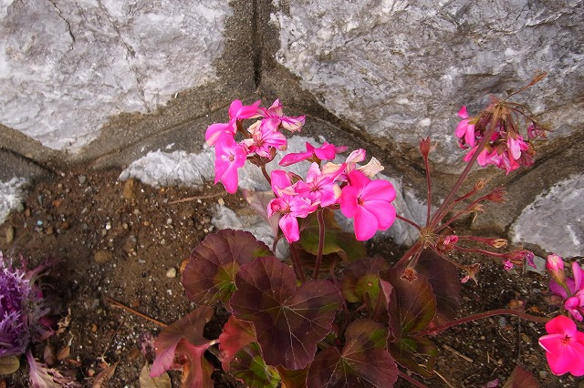 0123-flower-01.jpg