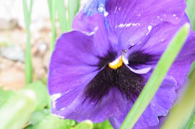 0123-flower-012.jpg
