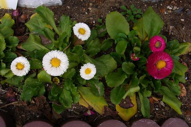 0123-flower-05.jpg