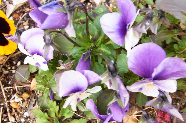 0123-flower-06.jpg