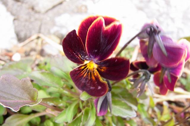 0123-flower-07.jpg