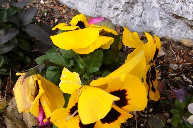 0123-flower-08.jpg