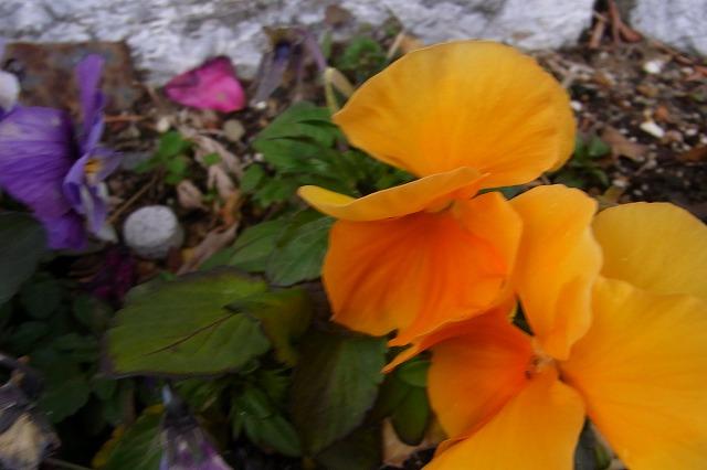 0123-flower-09.jpg