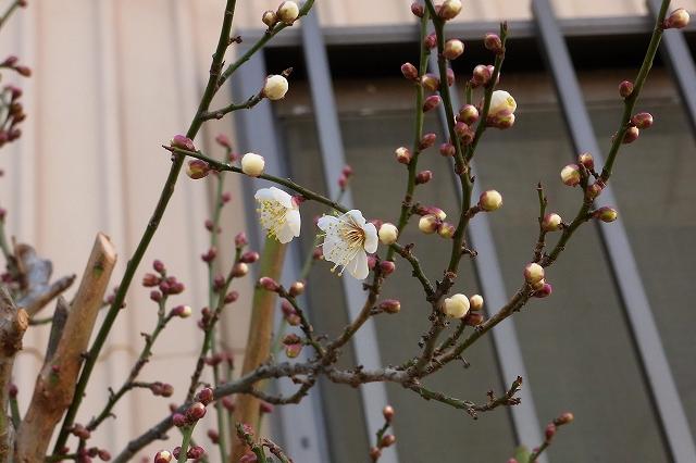 0203-flower-01.jpg