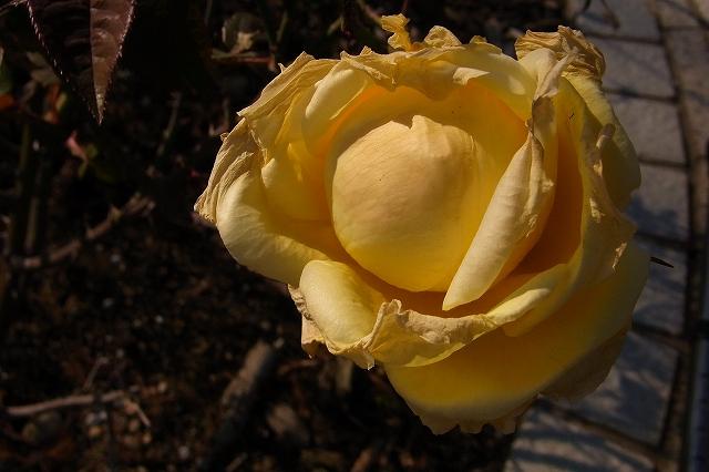 0203-flower-011.jpg