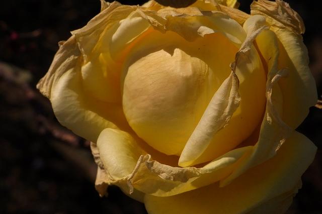 0203-flower-014.jpg