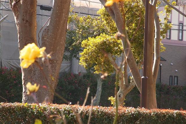 0203-flower-015.jpg