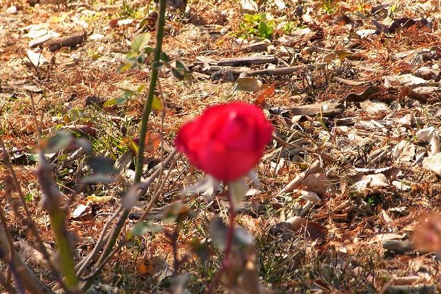 0203-flower-016.jpg