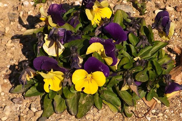 0203-flower-018.jpg