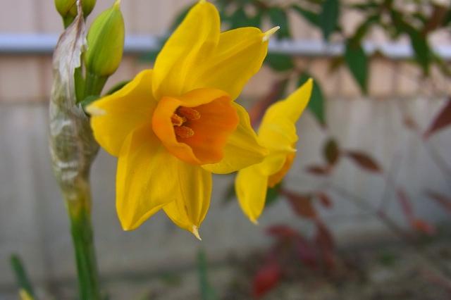 0203-flower-02.jpg