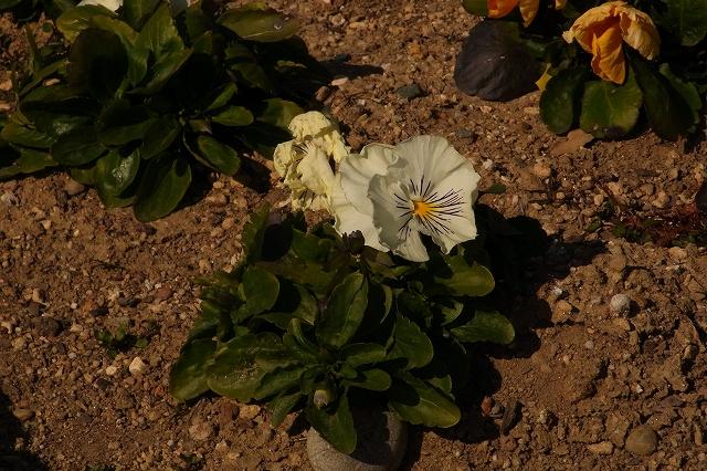 0203-flower-021.jpg