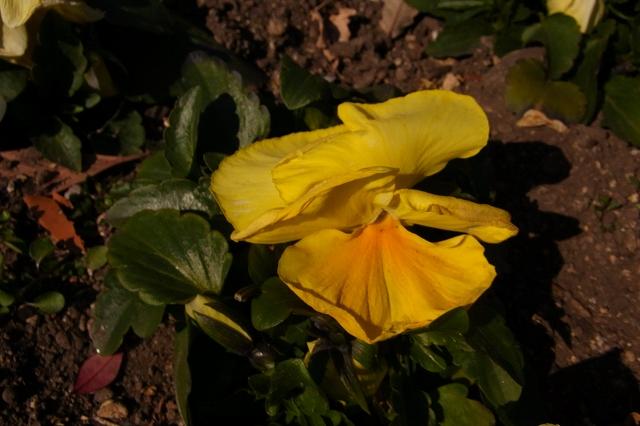 0203-flower-022.jpg