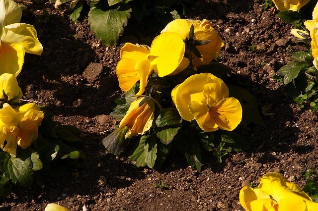 0203-flower-024.jpg
