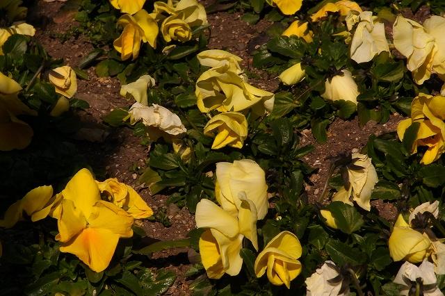 0203-flower-025.jpg