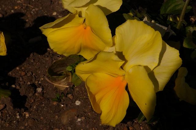 0203-flower-026.jpg