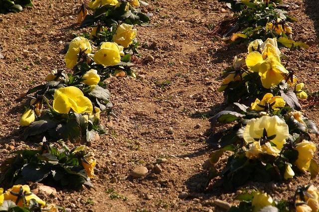 0203-flower-03.jpg
