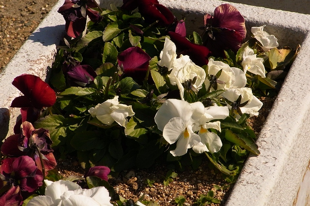 0203-flower-04.jpg