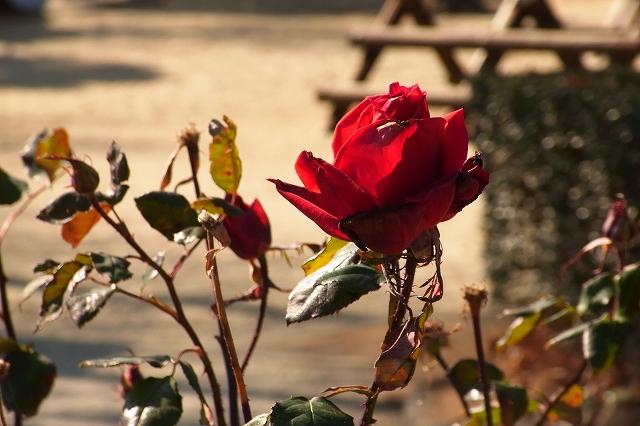 0203-flower-06.jpg