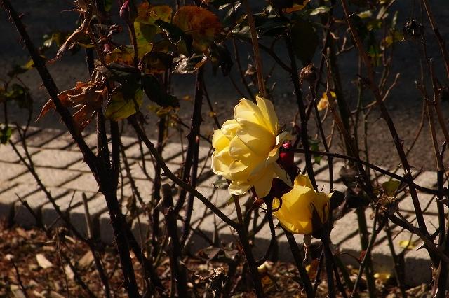 0203-flower-07.jpg