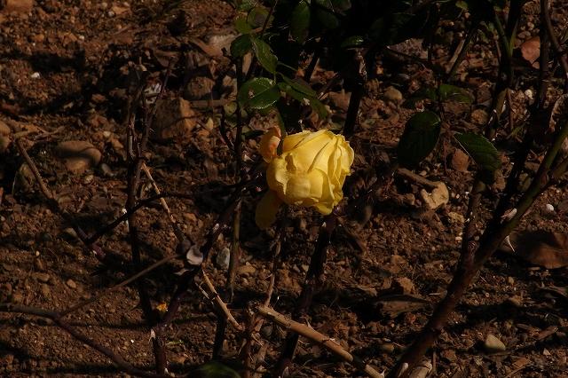 0203-flower-08.jpg