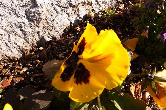 0215-flower-010-s.jpg