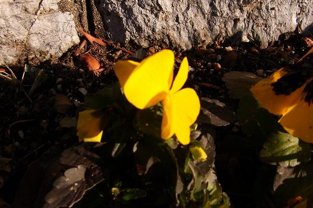 0215-flower-011-s.jpg