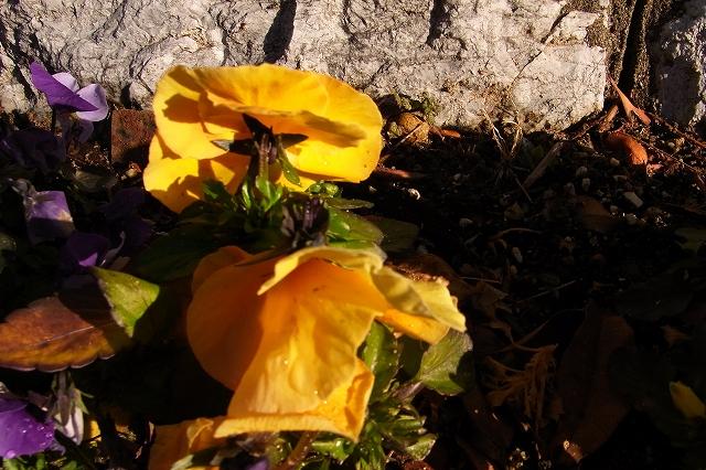 0215-flower-012-s.jpg