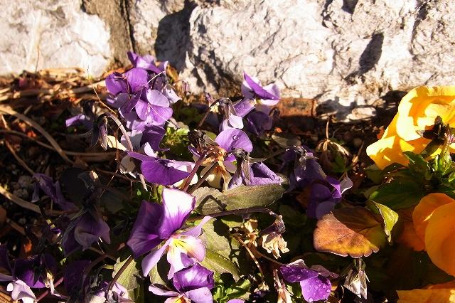 0215-flower-013-s.jpg