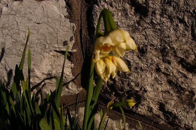 0215-flower-014-s.jpg