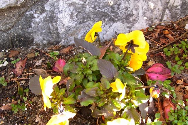 0215-flower-015-s.jpg