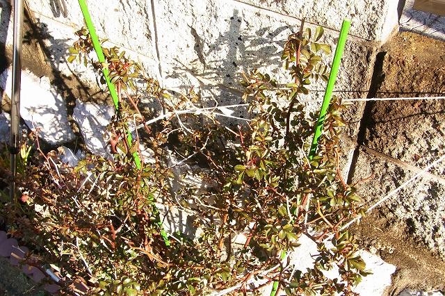 0215-flower-017-s.jpg