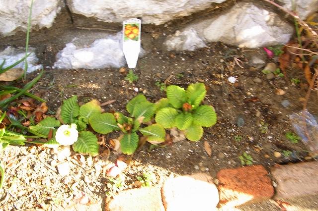0215-flower-018-s.jpg