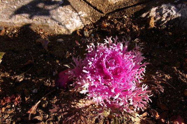 0215-flower-02-s.jpg