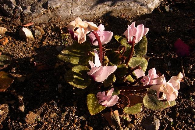 0215-flower-03-s.jpg